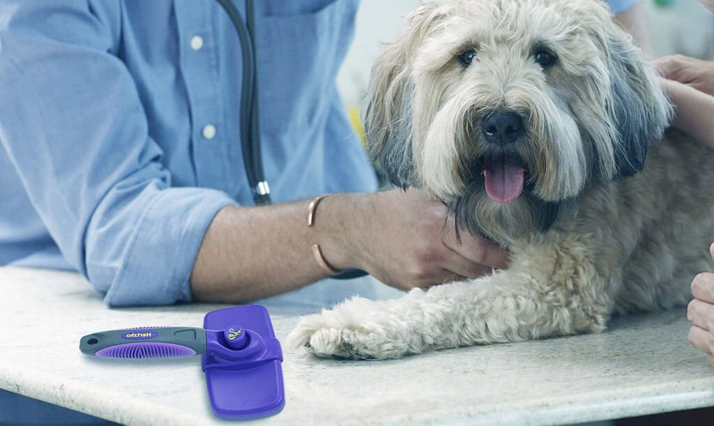 Best Dog Brush for Goldendoodle