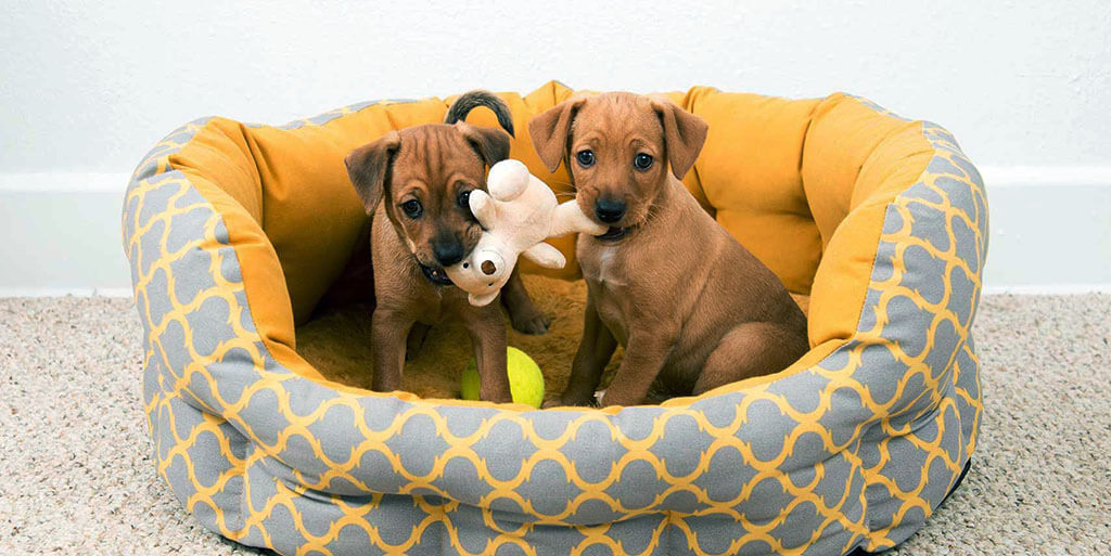 Best Dog Beds for Dachshunds Reviews