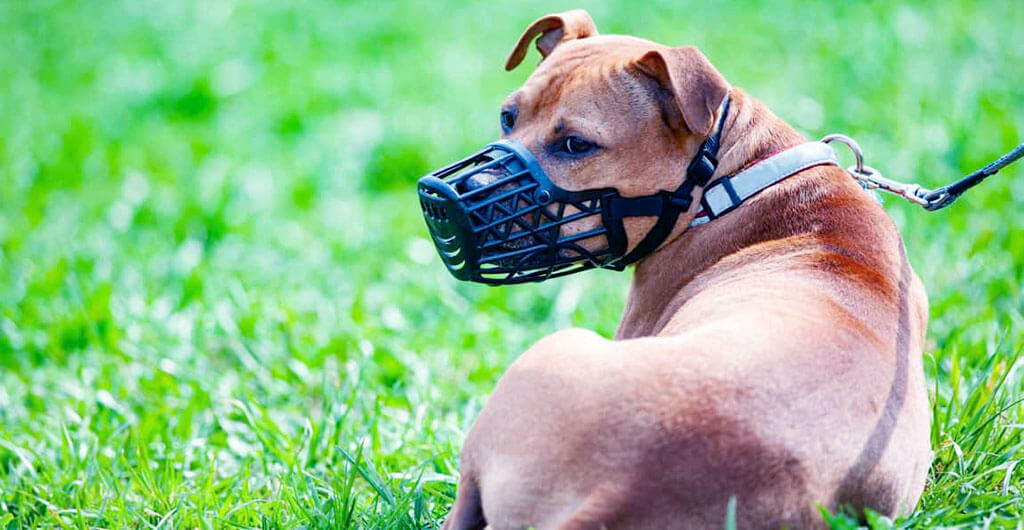 Best Muzzles for Pitbulls
