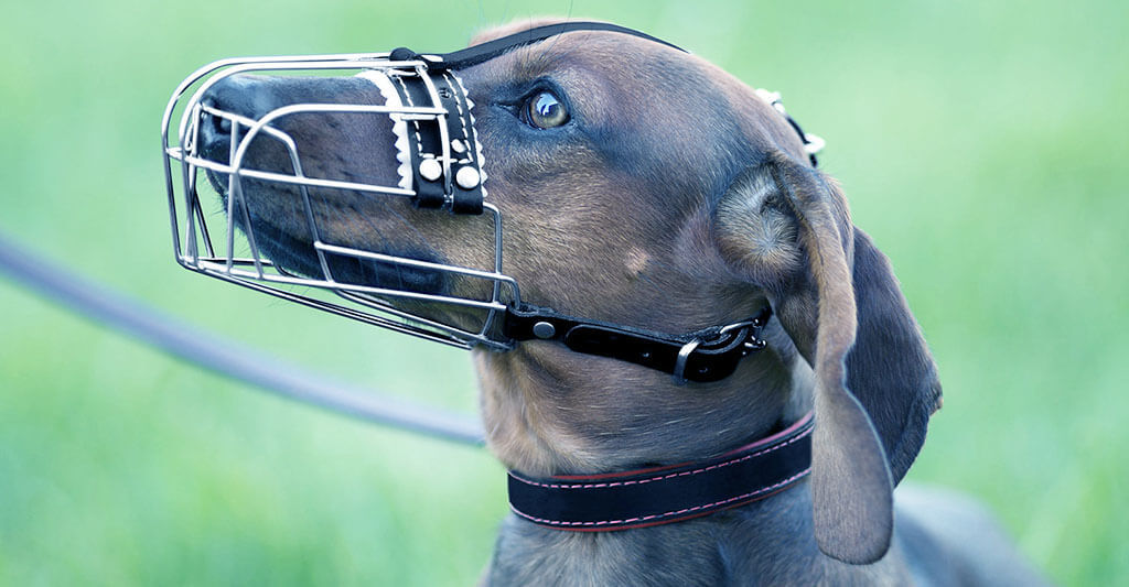 Best Muzzle for Dachshund