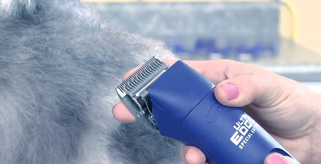Best Oneisall Dog Clippers