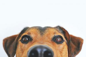 The Best Dog Foods for Diabetic Dogs