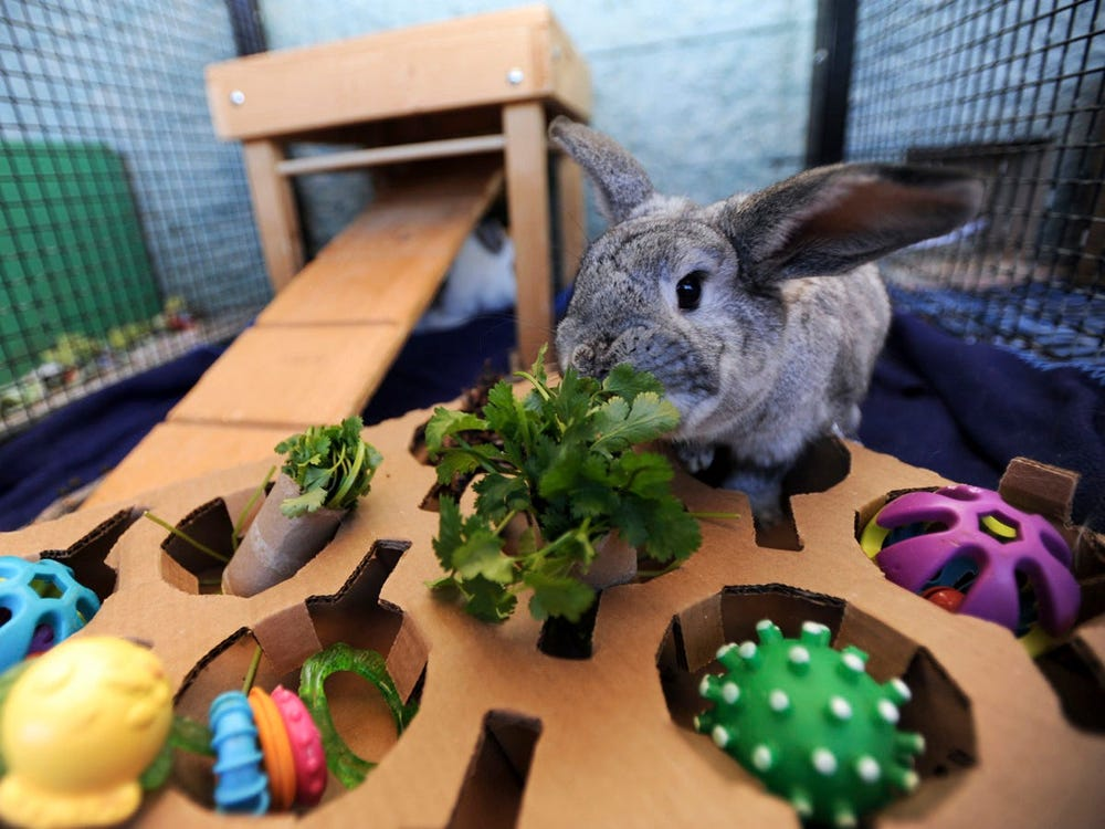 Best Chew Toys for Rabbits