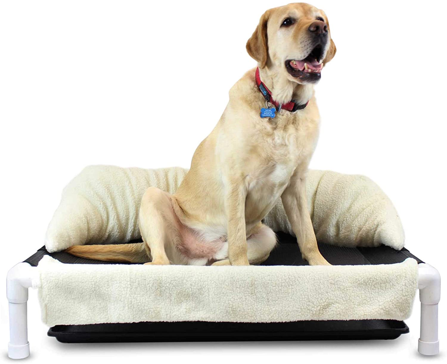 Best Dog Beds for Incontinence