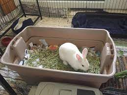 Why Do Rabbits Dig at your Clothes
